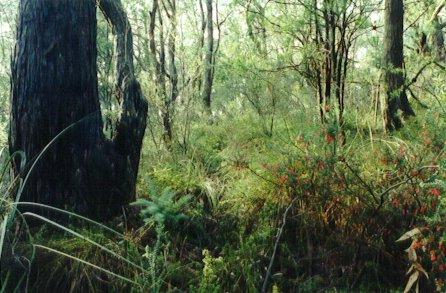 Hender Reserve bushland