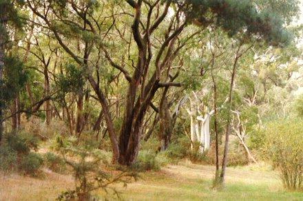 Madurta Reserve bushland