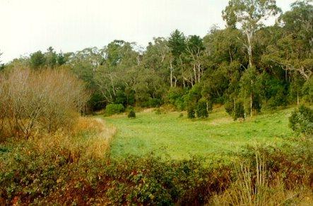 Stirling Park bushland